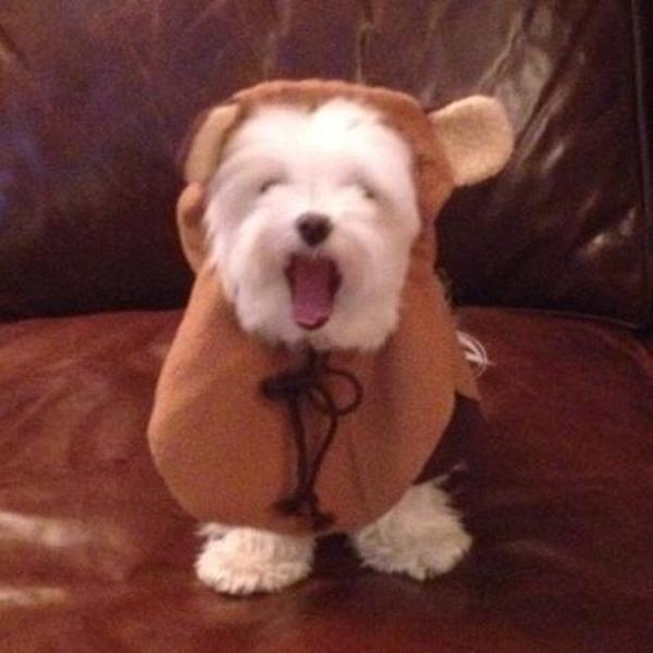 Star Wars Ewok Dog Costume Baxterboo