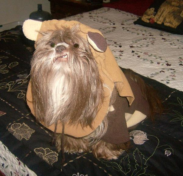 star wars ewok dog costume with same day shipping baxterboo. Black Bedroom Furniture Sets. Home Design Ideas