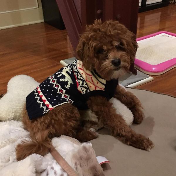 Fairisle Turtleneck Dog Sweater by fabdog® with Same Day Shipping ...