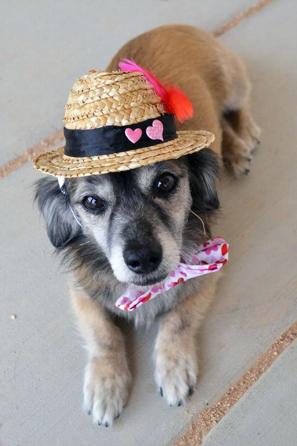 fedora-dog-hat-with-feathers-34826.jpg