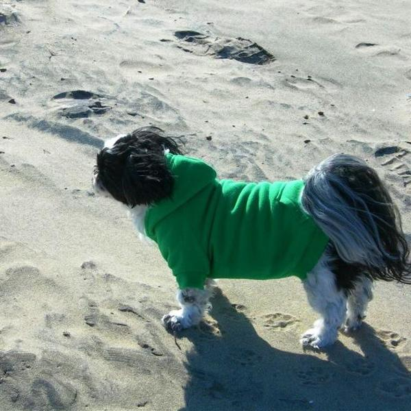 fleece-lined-dog-hoodie-by-zack-and-zoey-green-18746.jpg