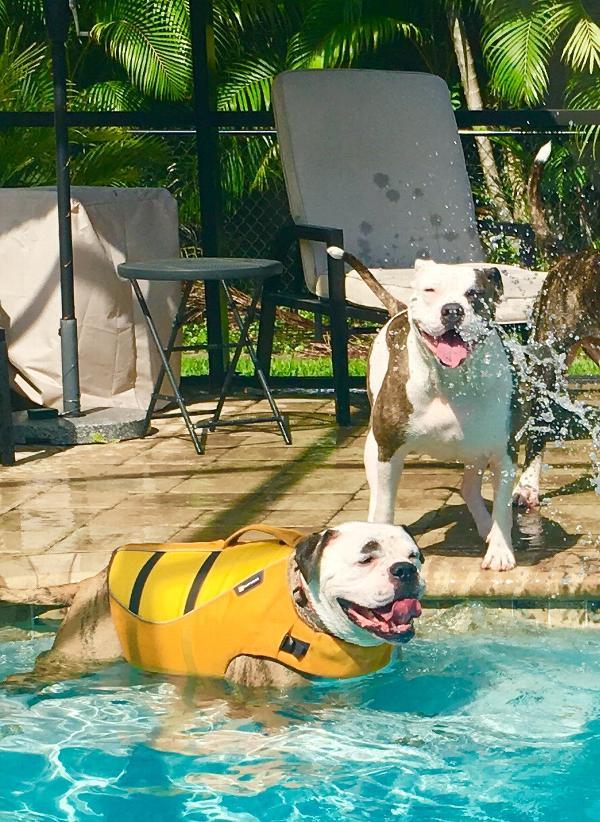 float coat dog life jacket by ruffwear wave baxterboo