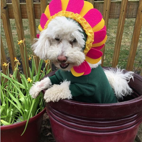 flower-dog-costume-with-separate-flower-headpiece-31512.jpg