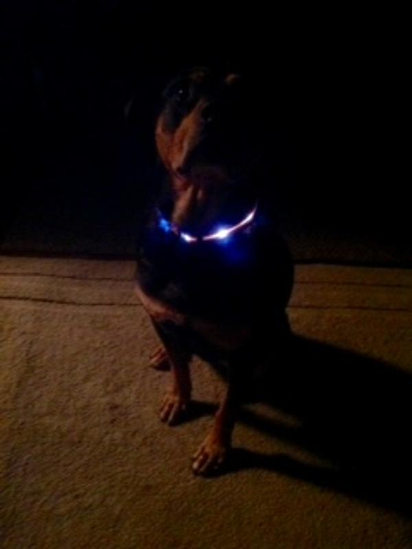 fluorescent-led-dog-collar-orange-18254.jpg