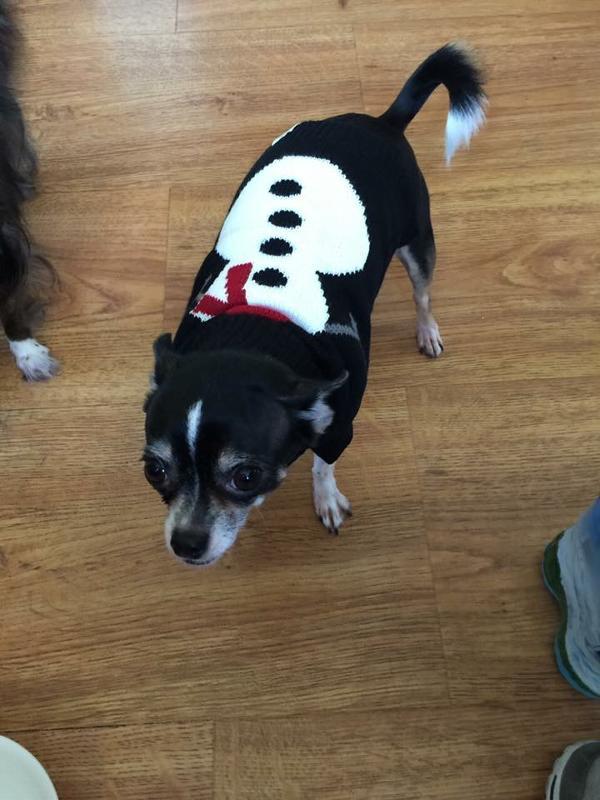 lil pig - Ugly Christmas Dog Sweater