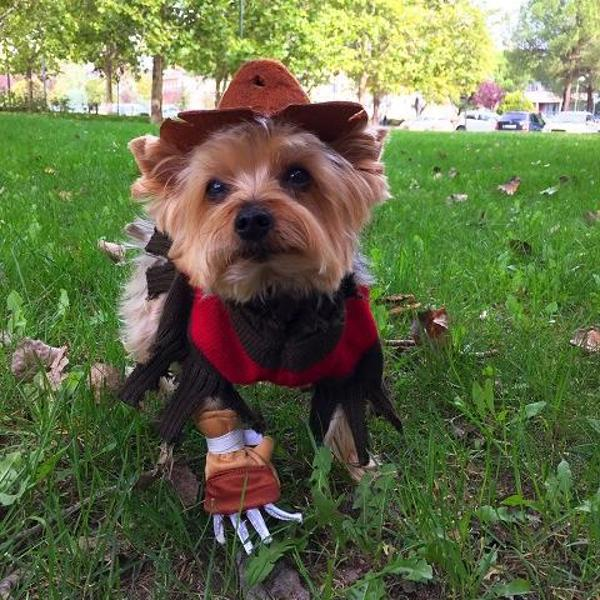 freddy-krueger-dog-costume-21557.jpg