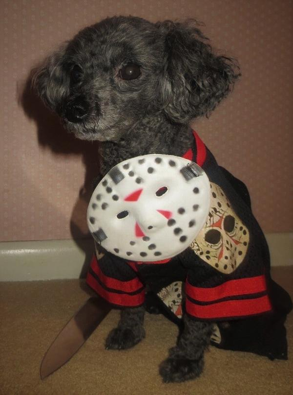 Friday The 13th Jason Dog Costume By Rubies Baxterboo