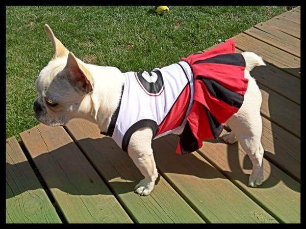 competitive price 67f2f 2c12d Georgia Bulldogs Cheerleader Dog Dress