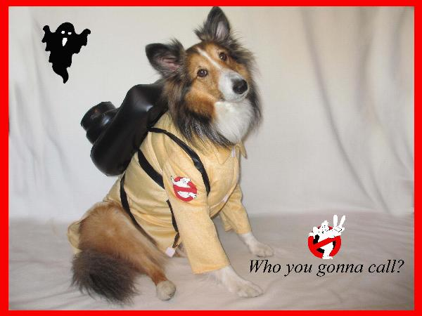 Teddy & Ghostbusters Dog Costume with Same Day Shipping | BaxterBoo