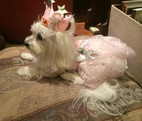 Snowy & Glinda the Good Witch Dog Costume with Same Day Shipping | BaxterBoo