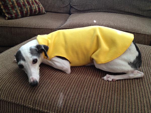 Gold Paw Fleece Dog Jacket Sunflower Yellow Baxterboo