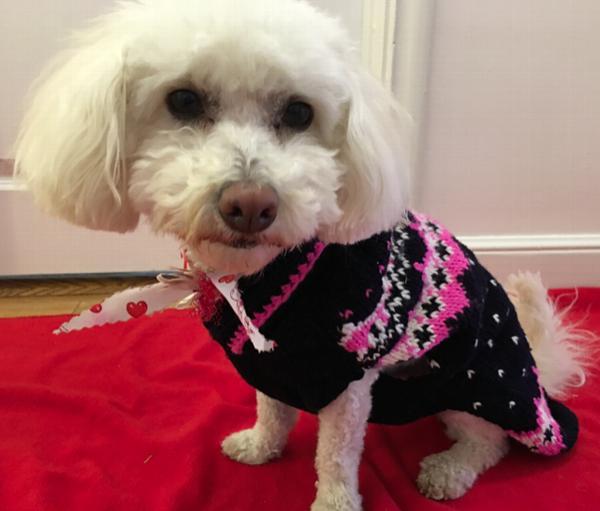Handmade Alpine Fair Isle Wool Dog Sweater - Navy and Pink with ...