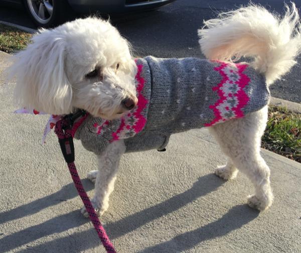 Handmade Alpine Fair Isle Wool Dog Sweater - Pink with Same Day ...