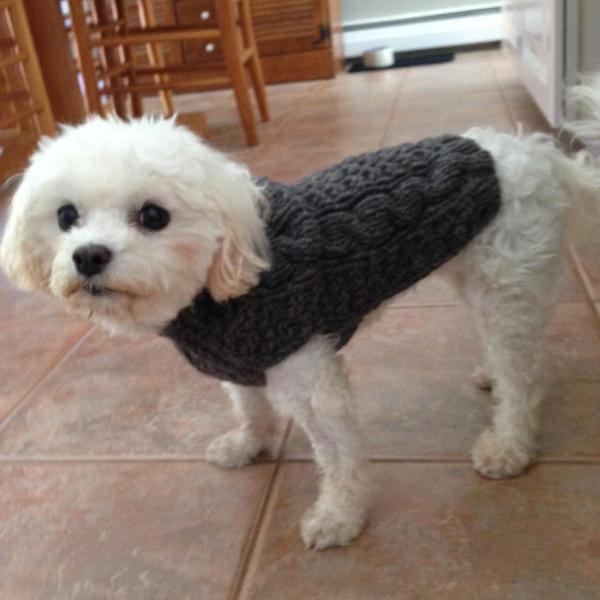 Handmade Cable Knit Wool Dog Sweater Gray Baxterboo