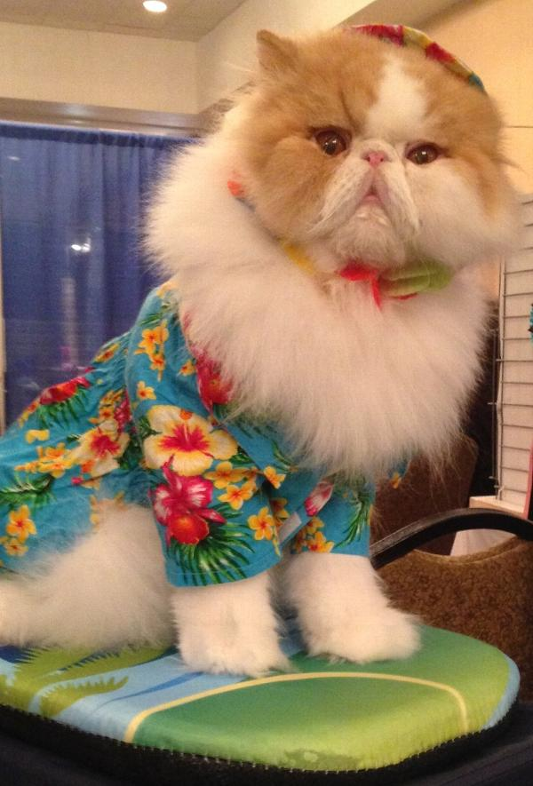 hawaiian-print-dog-shirt-green-18205.jpg