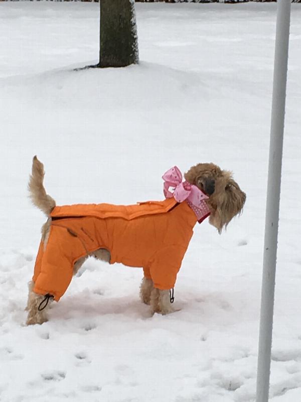 Helios Thunder Full Body Dog Coat Sporty Or Baxterboo