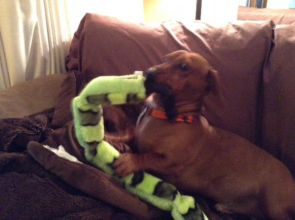 Invincible Snake Dog Toy Reviews