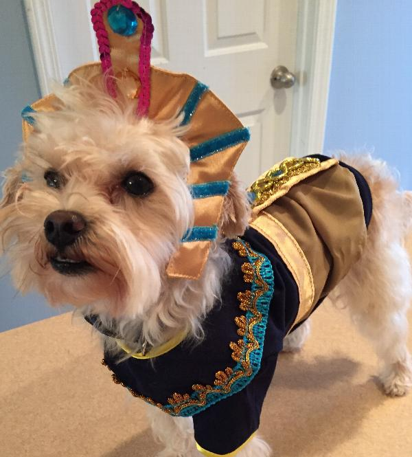 king-mutt-halloween-dog-costume-21434.jpg