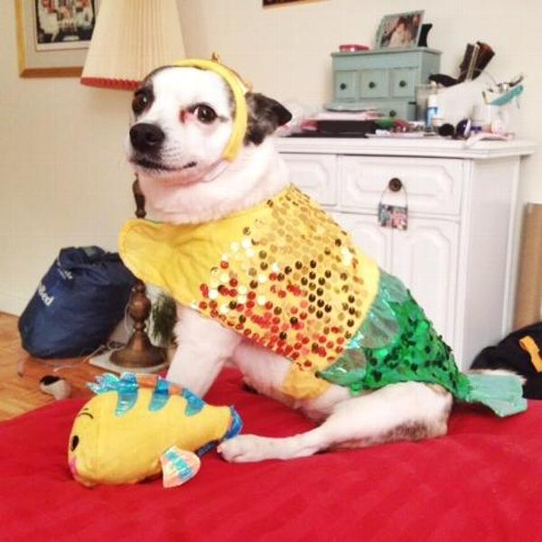 lil-furmaid-dog-costume-16033.jpg