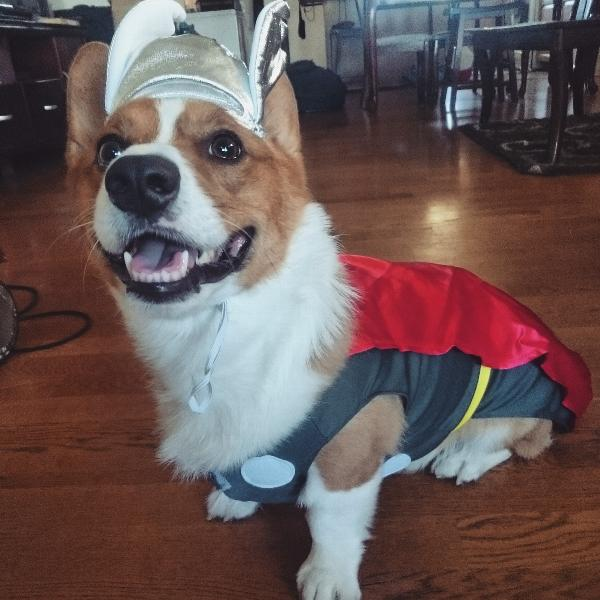 marvel thor dog costume with same day shipping baxterboo