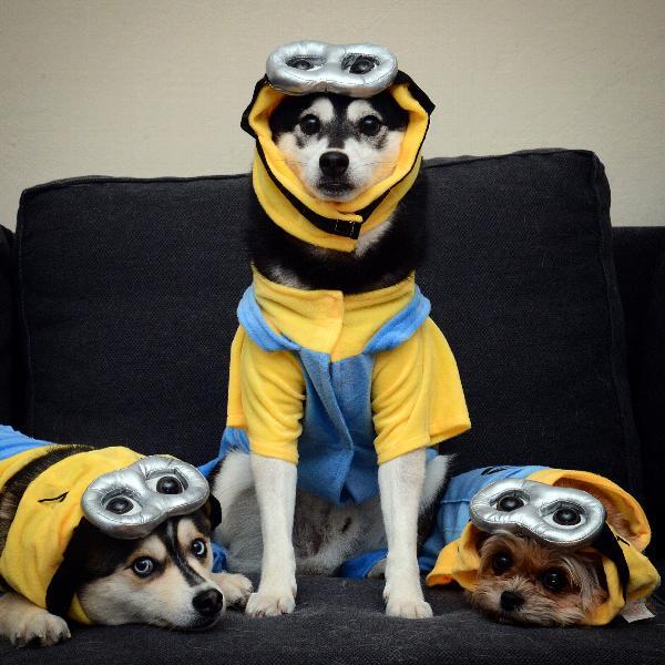 Nova Hunter Simba & Minion Dog Costume with Same Day Shipping | BaxterBoo