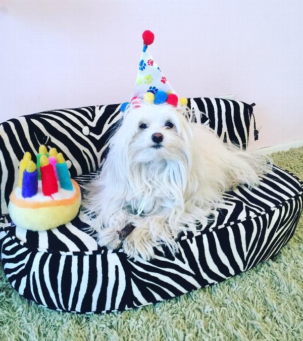 Musical Birthday Cake Plush Dog Toy