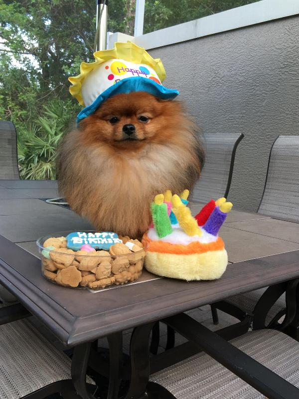 Musical Birthday Cake Plush Dog Toy