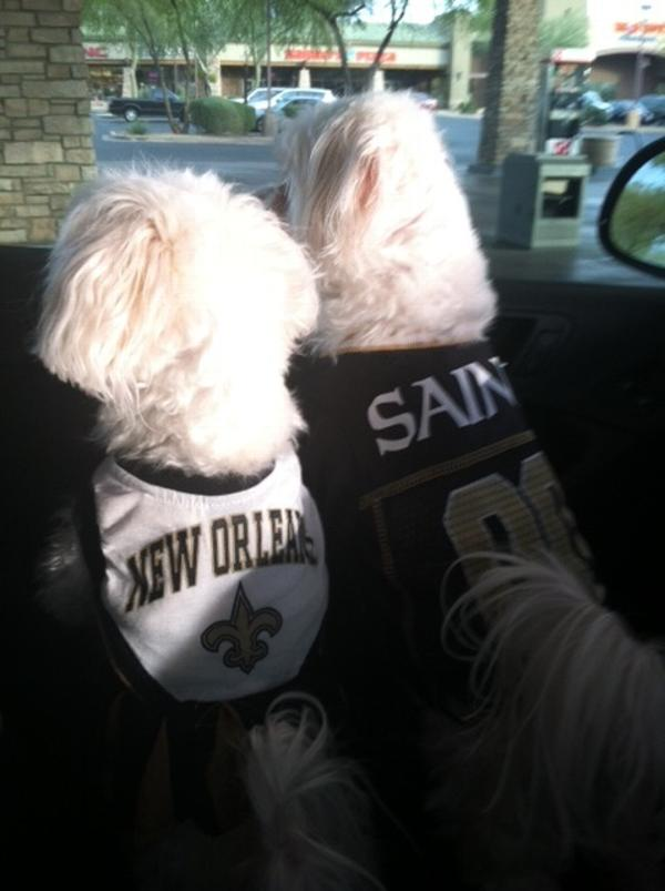 8ccdfb416 ... New Orleans Saints Officially Licensed Dog Jersey - Gold Tri ...