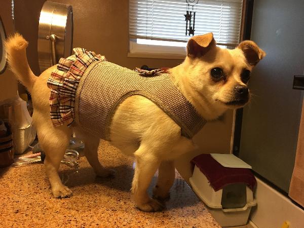 Parisian Pet Plaid Harness Dog Dress Khaki Baxterboo