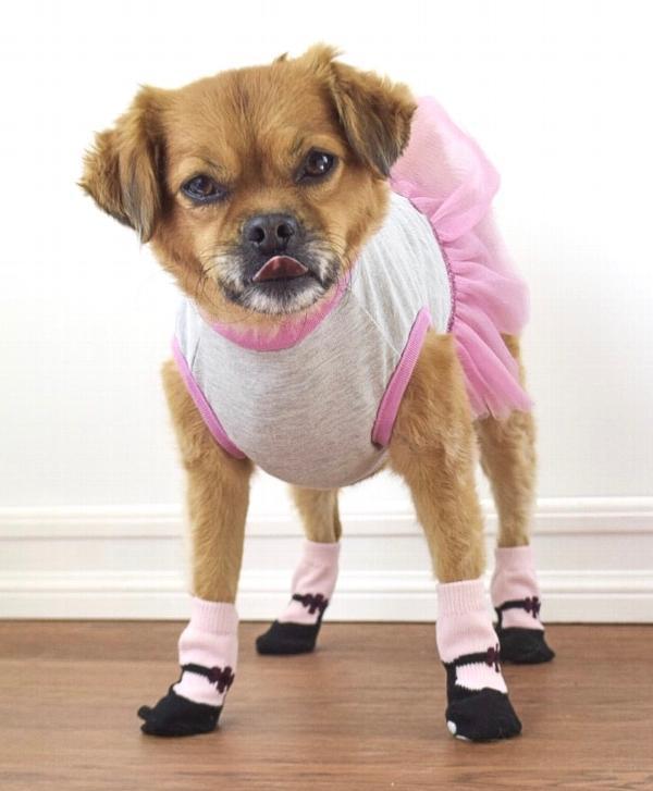 Pink Mary Janes PAWKS Dog Socks | BaxterBoo