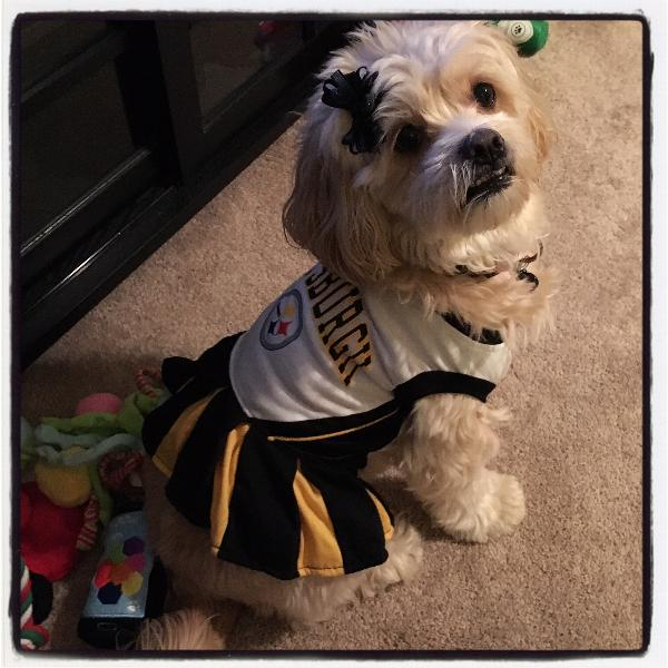 brand new 580a0 bbc12 Pittsburgh Steelers Cheerleader Dog Dress