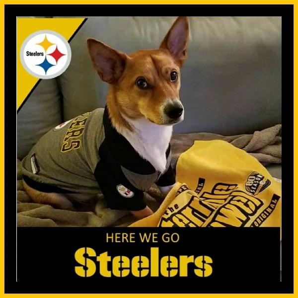 fa79d7b5e59 Pittsburgh Steelers Hooded Dog T-Shirt Customer Photos - Send us your  photo! DeVito