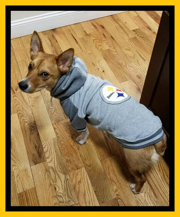 eefc504a5f4 Pittsburgh Steelers NFL Dog Hoodie - Gray Customer Photos - Send us your  photo! DeVito