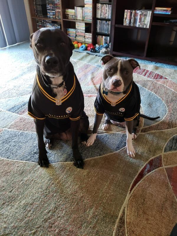 4b86da22b Steeler dog jersey - shocking price!