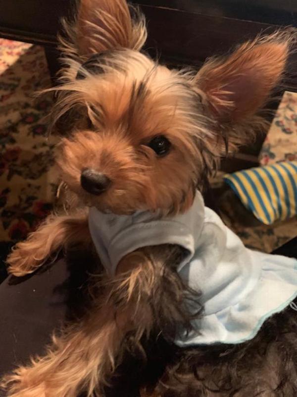 48256d10d Plain Dog Dress - Baby Blue Customer Photos - Send us your photo! Page