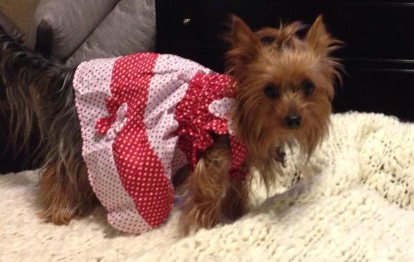 792de94ba6 Polka Dot Dog Sundress by Klippo - Red and White Customer Photos - Send us  your photo! Mochi