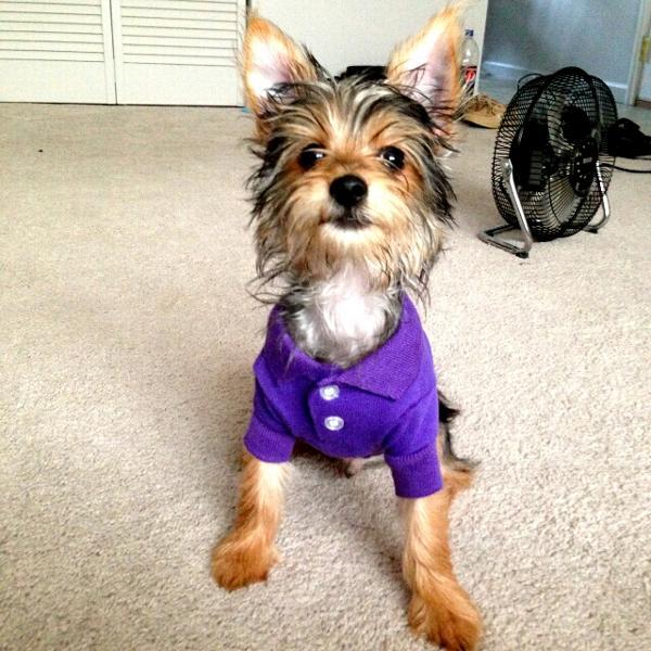cc9bf6f6e Polo Dog Shirt - Ultra Violet | BaxterBoo