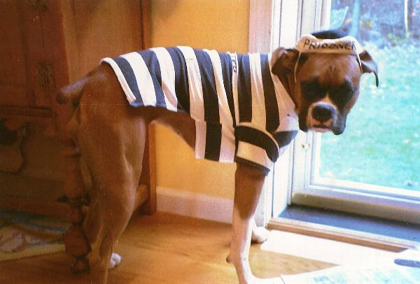 Matilda & Prisoner Dog Halloween Costume by Casual Canine with Same Day ...
