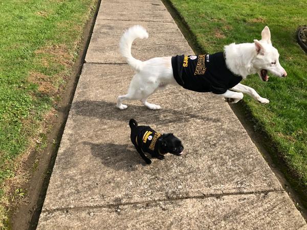 7088fb393b6 Property Of Pittsburgh Steelers Dog T-Shirt -...   BaxterBoo