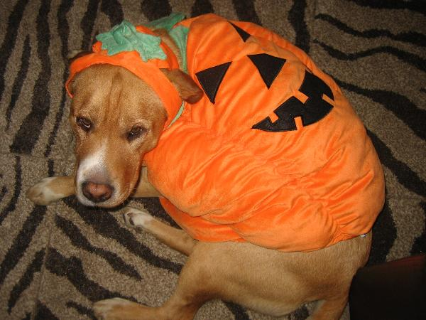 Rudy & Pumpkin Pooch Costume for Dogs by Zack and Zo... | BaxterBoo