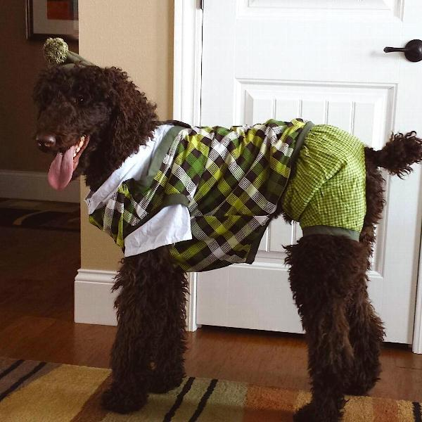 putter-pup-halloween-dog-costume-16139.jpg