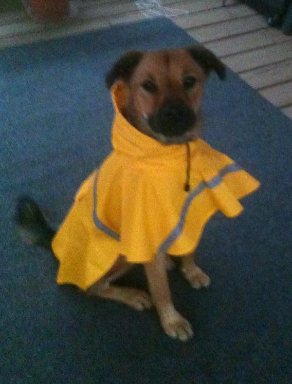 Dog Rain Jacket With Reflective Strip Yello Baxterboo