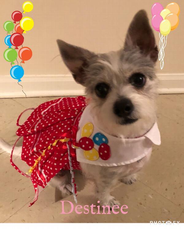 Boo Balloon Dog Collar