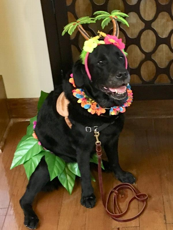 Rubies Hula Girl Pet Costume Medium