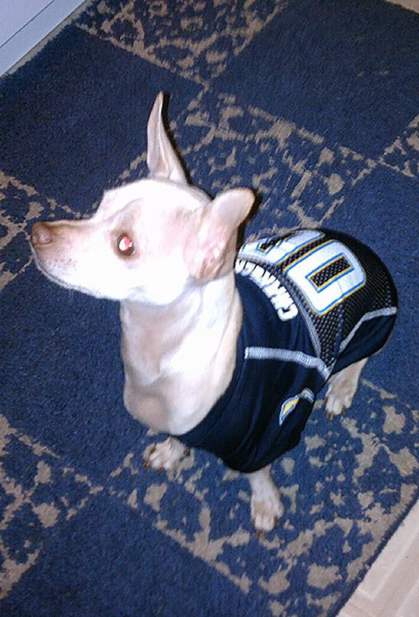 San Diego Chargers Dog Jersey With Same Day Shipping