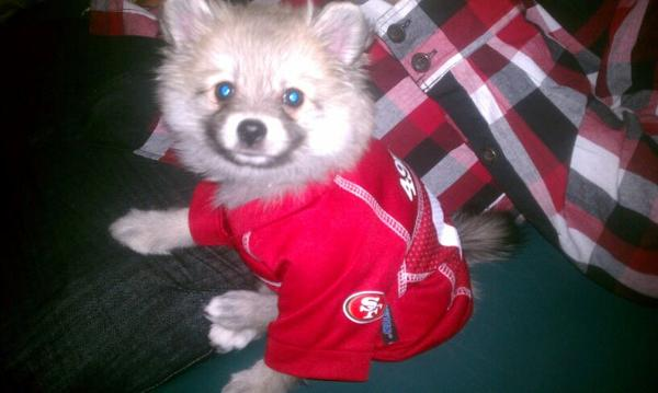 ... San Francisco 49ers Dog Jersey with Same Day Shipping Baxte ... eeea27597
