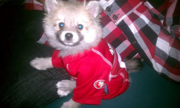 ... San Francisco 49ers Dog Jersey with Same Day Shipping Baxte ... eeea27597