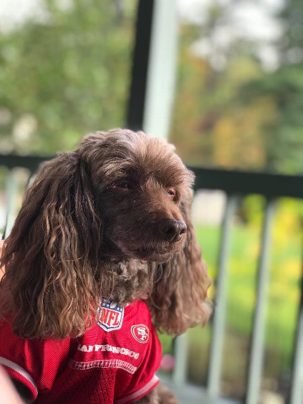 35cd8fd02 San Francisco 49ers Officially Licensed Dog Jersey - Red with White Trim  Customer Photos - Send us your photo! Rascal