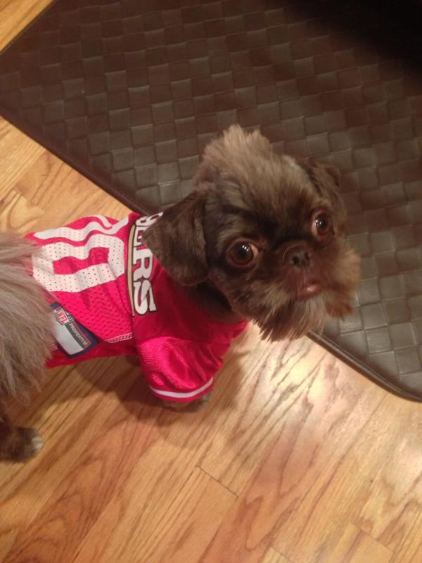 8e56bae45 San Francisco 49ers Officially Licensed Dog J...