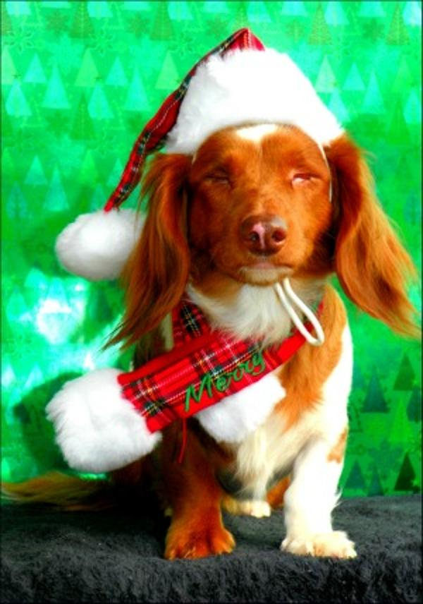 Santa S Dog Hat By Puppia Red Plaid Baxterboo